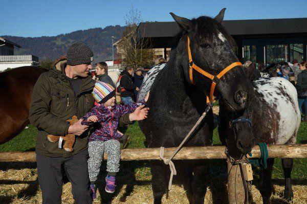 ziegen-und-pferde-5-600×399.jpg